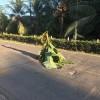 En la Ruta Nacional 160: Siembran matas de plátano en protesta por la gran cantidad de huecos en carretera entre Paquera y Cóbano