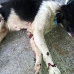 FISCALÍA DE POCOCÍ INVESTIGA A SOSPECHOSO DE CRUELDAD ANIMAL: Al parecer llevaba arrastrado a un perro el cual iba amarrado a bicimoto