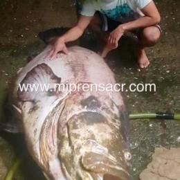 Pescador de Manzanillo de Cóbano capturó pescado de 196 kilos y de casi dos metros y medio