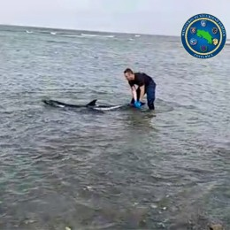 Se encontraba varado en la playa: Guardacostas rescata delfín en el Pacífico norte