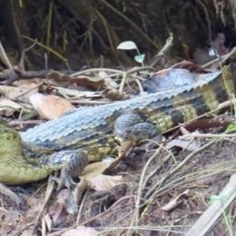 Costa Rica registra más de 4 mil avistamientos de aves y mamíferos en medio de la pandemia