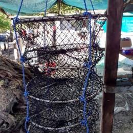 Golfo de Nicoya: Granjas para cultivo de ostras en Isla Venado, Chira y Costa de Pájaros estarán listas en noviembre 2020