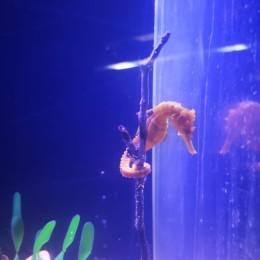 Mejoras en laboratorio del Parque Marino del Pacífico impactarán en proliferación de granjas acuícolas