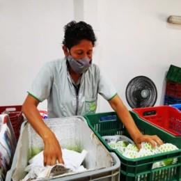 Productores de guayaba taiwanesa en Río Grande de Paquera dan sus primeros pasos para exportar la fruta