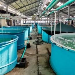 Granjas marinas buscan reactivación económica de las familias costeras en el Pacífico: Laboratorio del Parque Marino del Pacífico está siendo remodelado para garantizar semillas a las granjas instaladas a lo largo del Golfo de Nicoya
