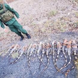 REPTILES MUERTOS: Fueron encontrados en dos sacos dentro de un vehículo en La Cruz